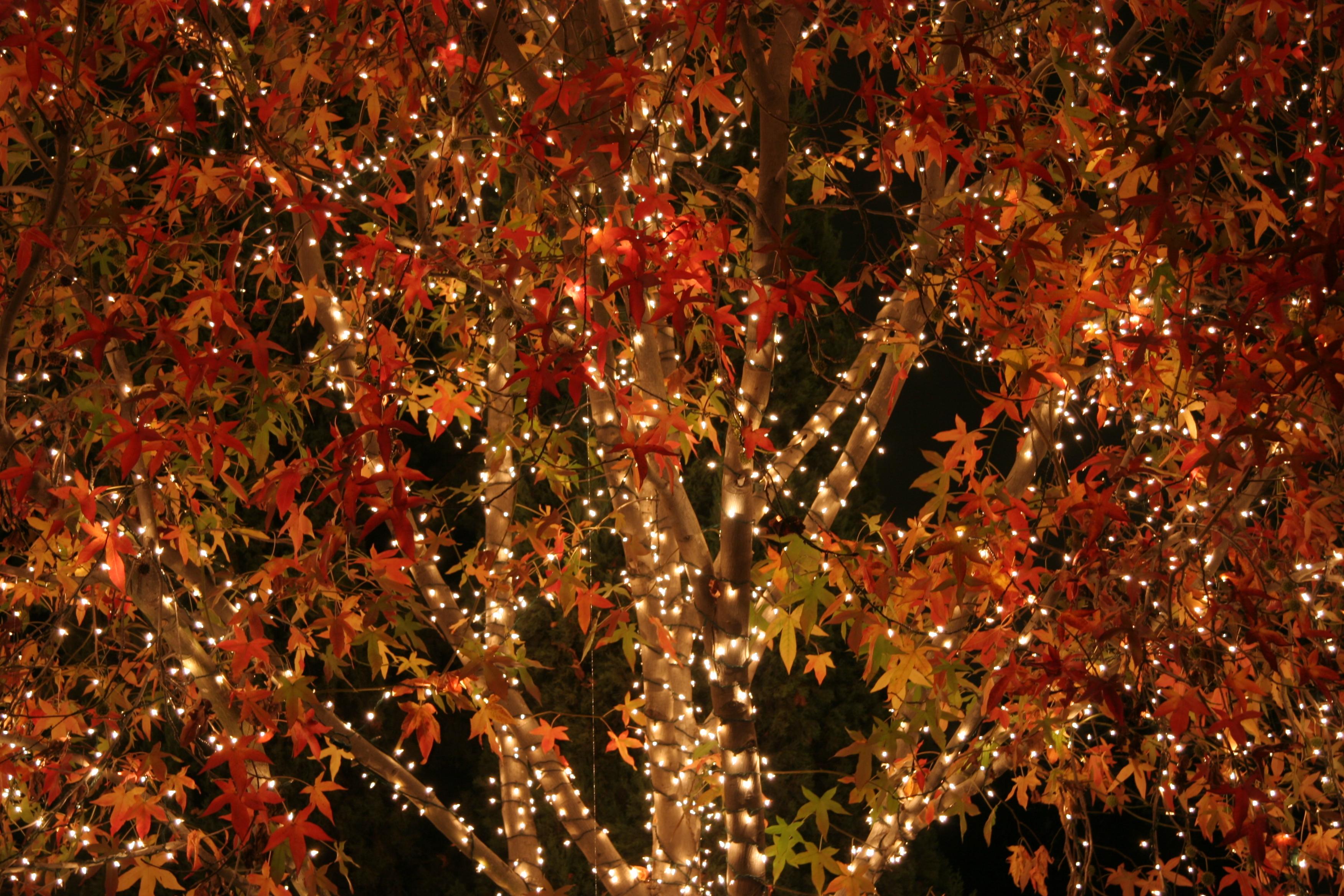 ot christmas afire - Amber Christmas Lights