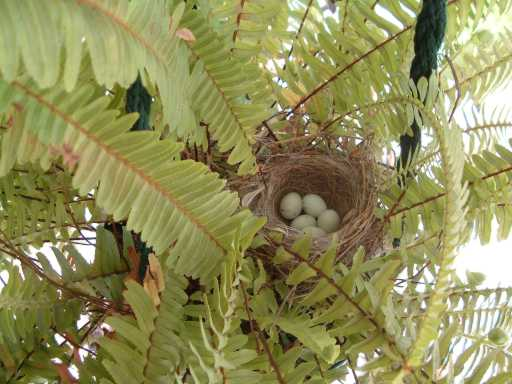 Dove eggs?